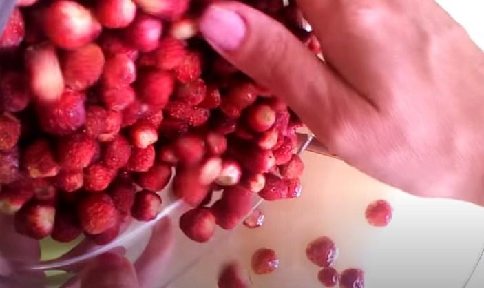 Варенье на зиму из лесной земляники – рецепты пальчики оближешь